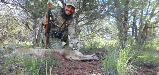First mountain lion