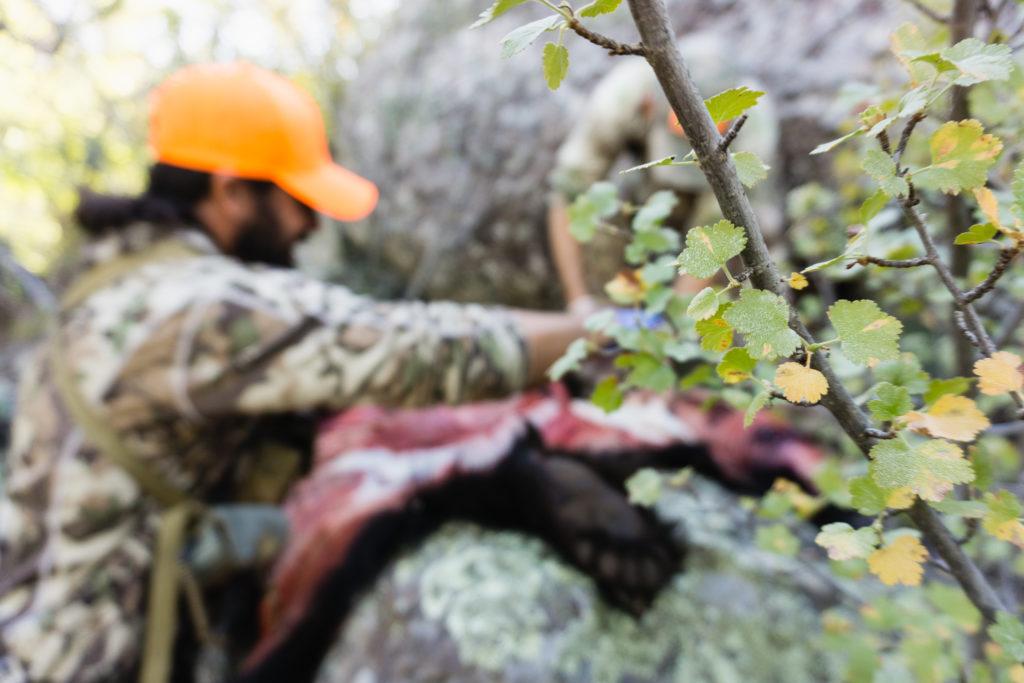 dialed-in-hunter-00550